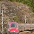 Photos: ヤマザクラ