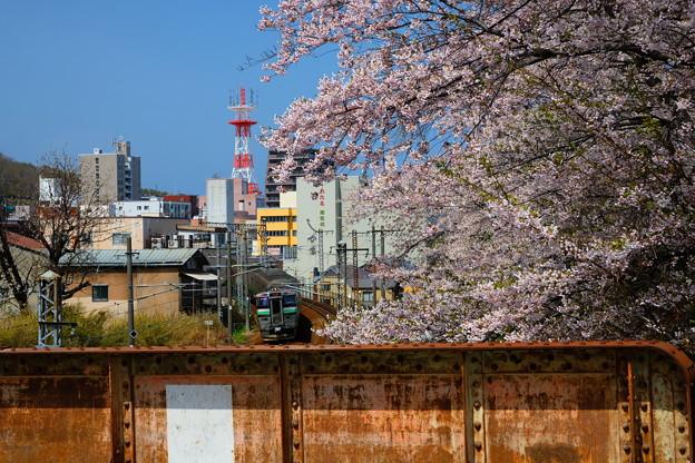 小樽の桜 花園橋