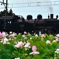 Photos: 大桑の蓮の花とC11 325