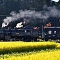 Photos: 稲穂とC11 325牽引SL大樹6号