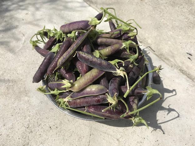 ツタンカーメンのえんどう豆