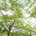 Photos: 大池遊園