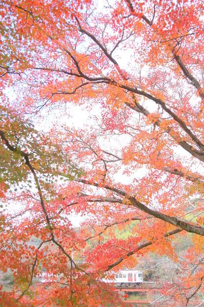 秋の岸川線