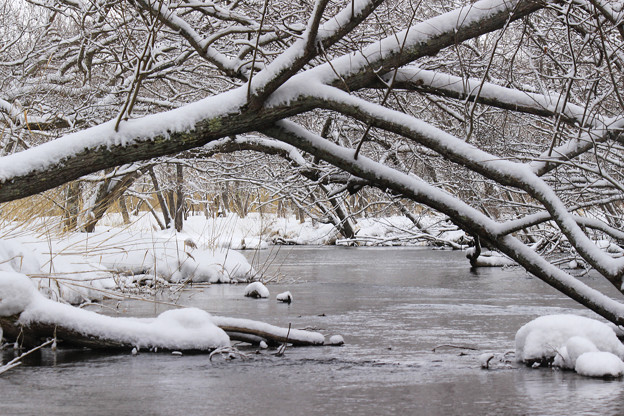 Photos: 釧路川源流IMG_6098a