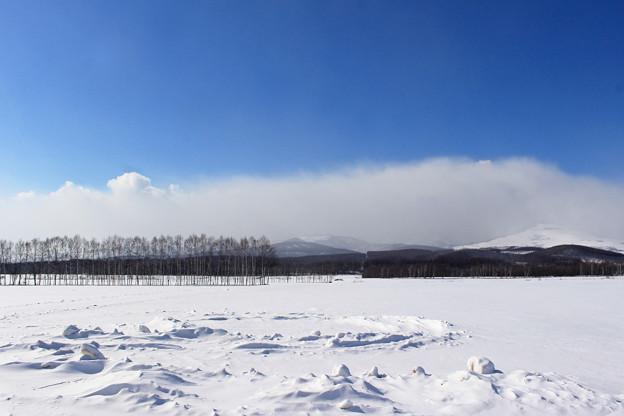 十勝の平原と防風林IMG_6178a