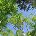 Photos: 支笏湖畔の森IMG_7359a