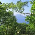 Photos: 木々の間から見える支笏湖IMG_7249b
