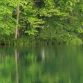 Photos: 新緑の池IMG_7412a
