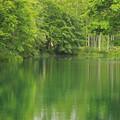 Photos: 新緑の池IMG_7416a