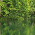 Photos: 新緑の池IMG_7421a