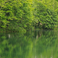 Photos: 新緑の池IMG_7422a
