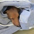 Photos: メレ爆睡