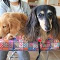 Photos: メレとプチ
