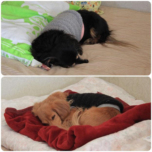 Photos: 寝んね