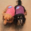 ママの手編みのニット着てみたよ