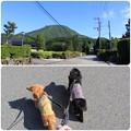 Photos: 朝ん歩