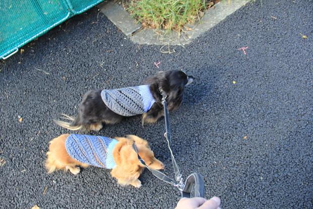 Photos: お散歩