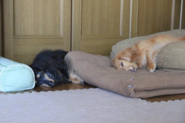 シンクロ寝