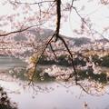津久井湖城山公園の桜_6621