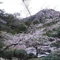 箱根公園_6969