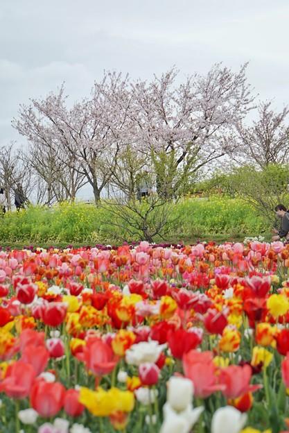 春の花たちの共演_6991