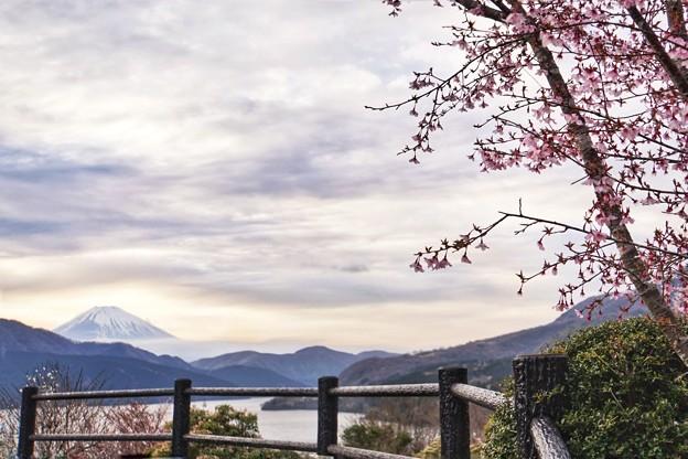 富士と桜と芦ノ湖と…_6983