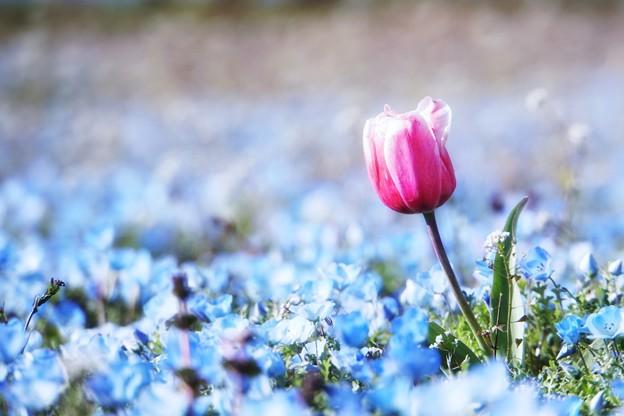 花の都公園_7214