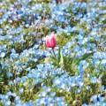 花の都公園_7215