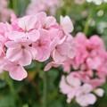 花の都公園_7218