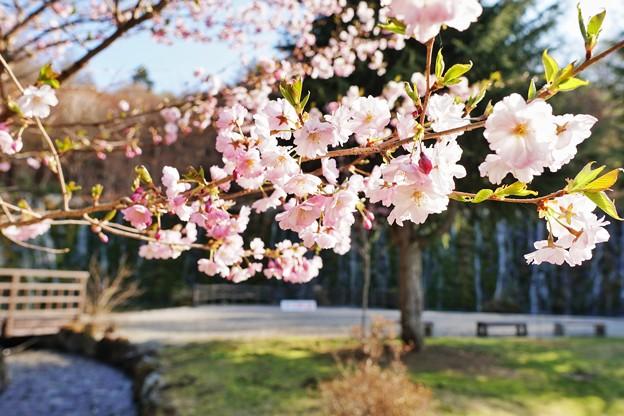 花の都公園_7220