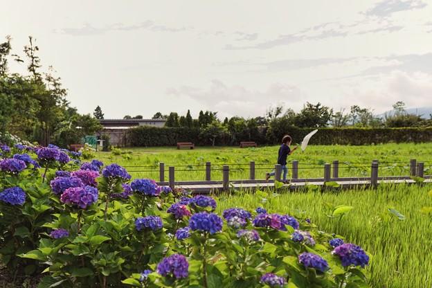 花菜ガーデン6月_8718