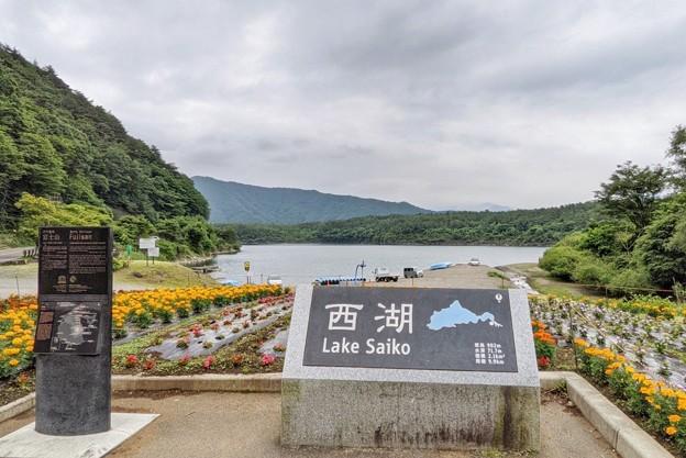 西湖_8998