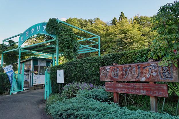 町田ダリア園_0126