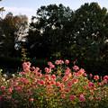 神代植物公園_0179