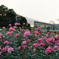 神代植物公園_0182