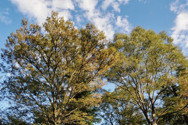 神代植物公園_0201
