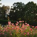 神代植物公園_0205