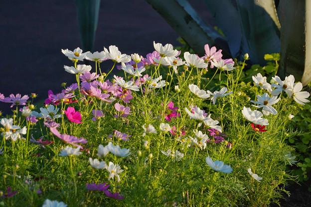 神代植物公園_0207