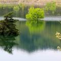 ダムの水没林