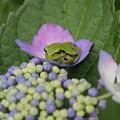 Photos: 花咲く花に