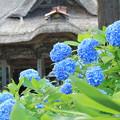 Photos: 境内の紫陽花