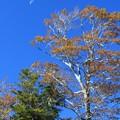 Photos: 高原の月