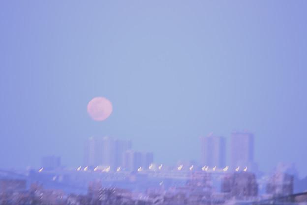 はる の 月