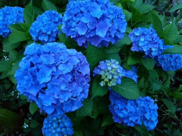 藍より青く