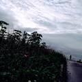 赤ツメクサの咲く道