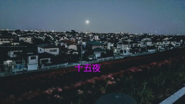 Photos: 皓皓
