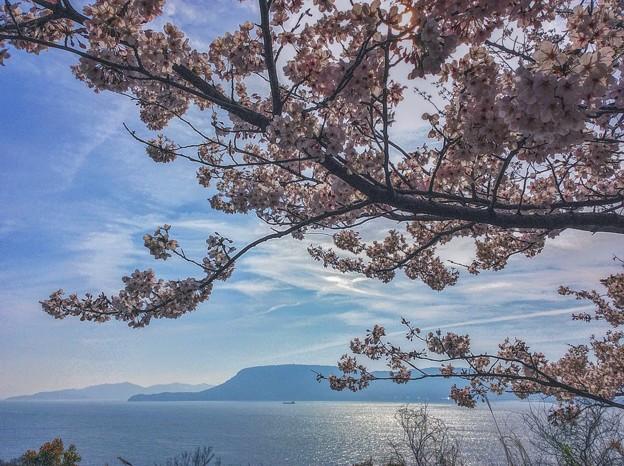 瀬戸の桜~女木島~