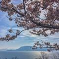 Photos: 瀬戸の桜~女木島~