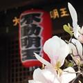 Photos: 花咲く寺