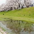 Photos: 落花